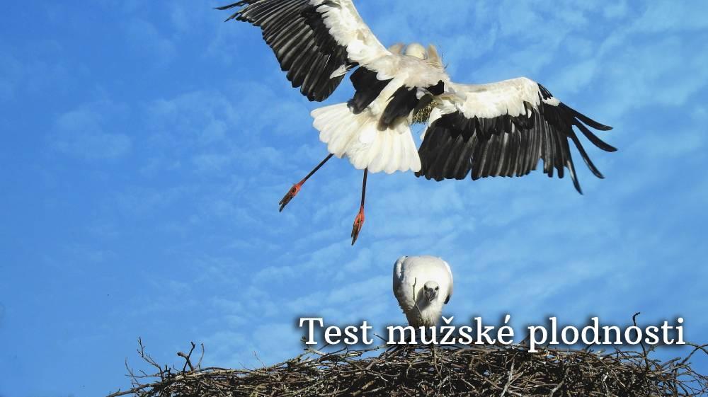 test mužské plodnosti